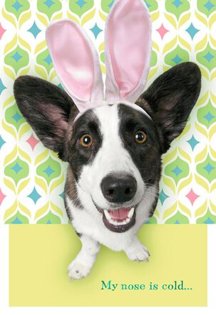 Warm Heart Dog Easter Card