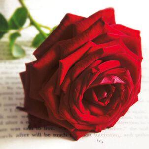 Red Rose Elegance Blank Card