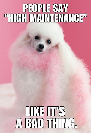 High Maintenance Poodle Funny Just Because Card