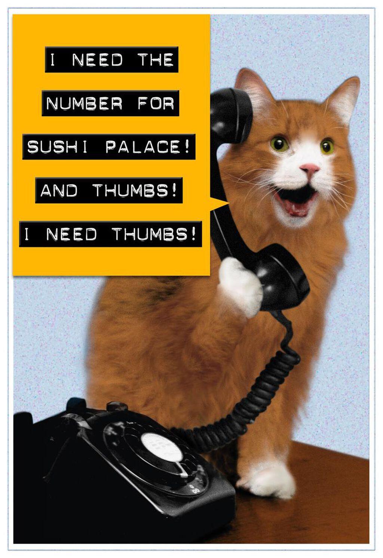 Sushi Palace Cat Funny Birthday Card