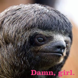 Damn, Girl Sloth Funny Just Because Card