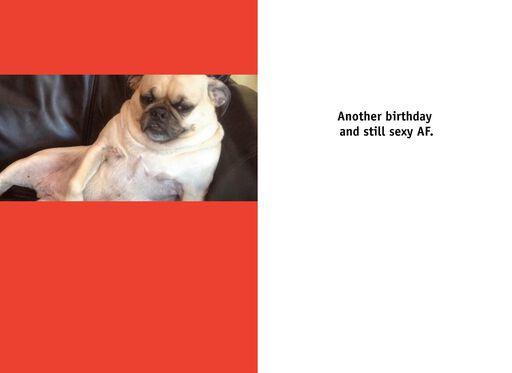 You Sexy Dog Funny Birthday Card,
