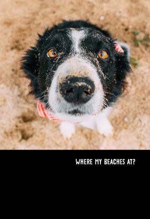 Beach Loving Pup Funny Birthday Card