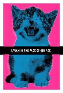 Hissing Kitten Funny Birthday Card,