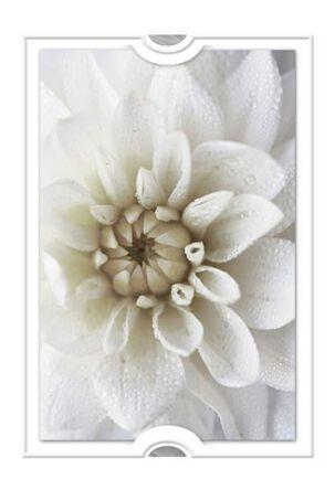 Bright White Bloom