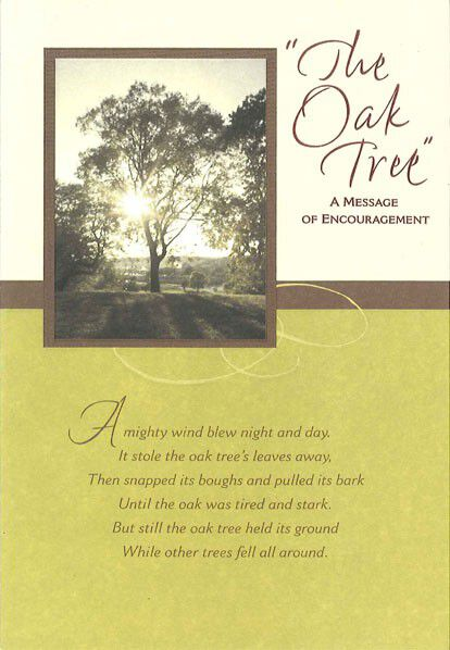 The Oak Tree Encouragement Card - Greeting Cards - Hallmark