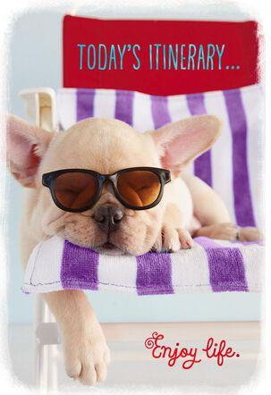 Dog in Sunglasses Enjoy Life Retirement Card