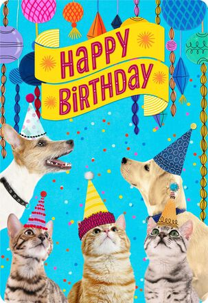 Party Cats and Dogs Jumbo Birthday Card From Us, 16.25""