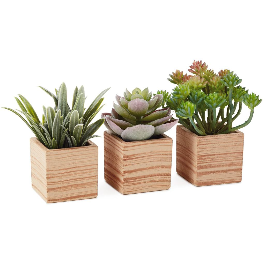 Assorted Succulents Potted Artificial Plant Decoration 4 Set Of