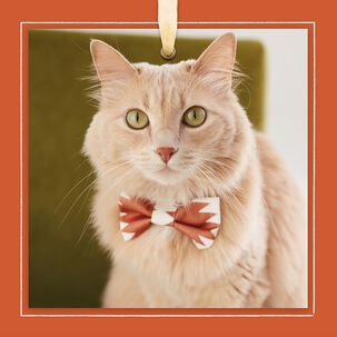 Cat With Bow Tie Blank Card