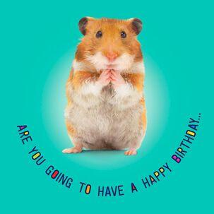 Hamster Dance Musical Birthday Card
