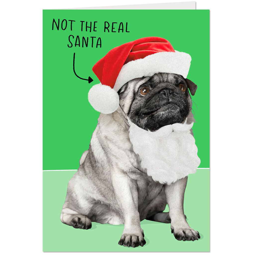 Santa Dog Not a Present Funny Christmas Card - Greeting Cards - Hallmark