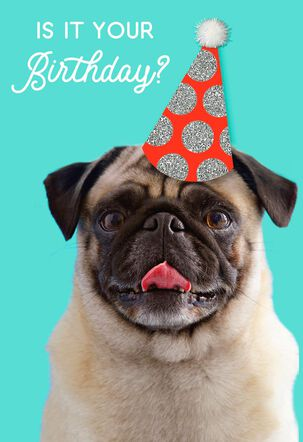 Dog in a Party Hat Birthday Card