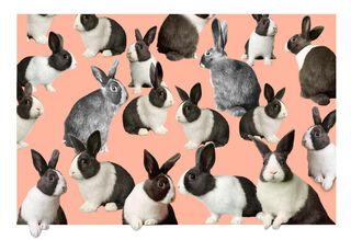 Multiplying Bunnies Funny Easter Card,