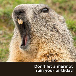 Marmot on the Loose Birthday Card