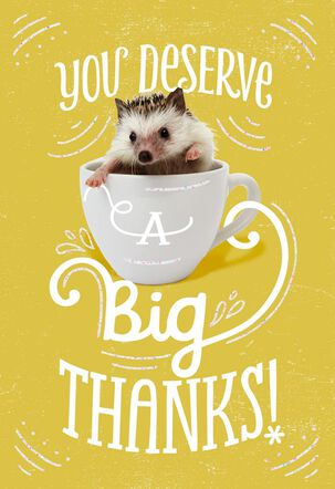 Nice Hedgehog Thank You Card