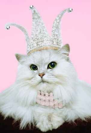 Cat Queen Funny Birthday Card