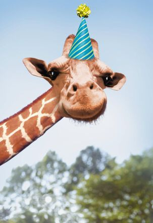Betting Giraffe Funny Birthday Card