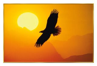 Soaring Eagle Blank Veterans Day Card,