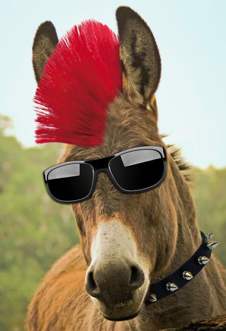 Badass Donkey With Red Mohawk Funny Birthday Card Greeting Cards