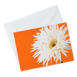Photo of White Gerber Daisy Note Cards, Pack of 10, , large