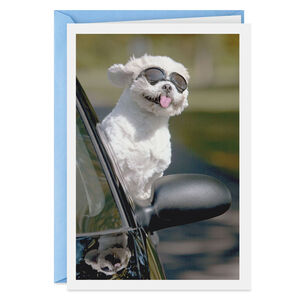 Breezy Dog Just Because Card