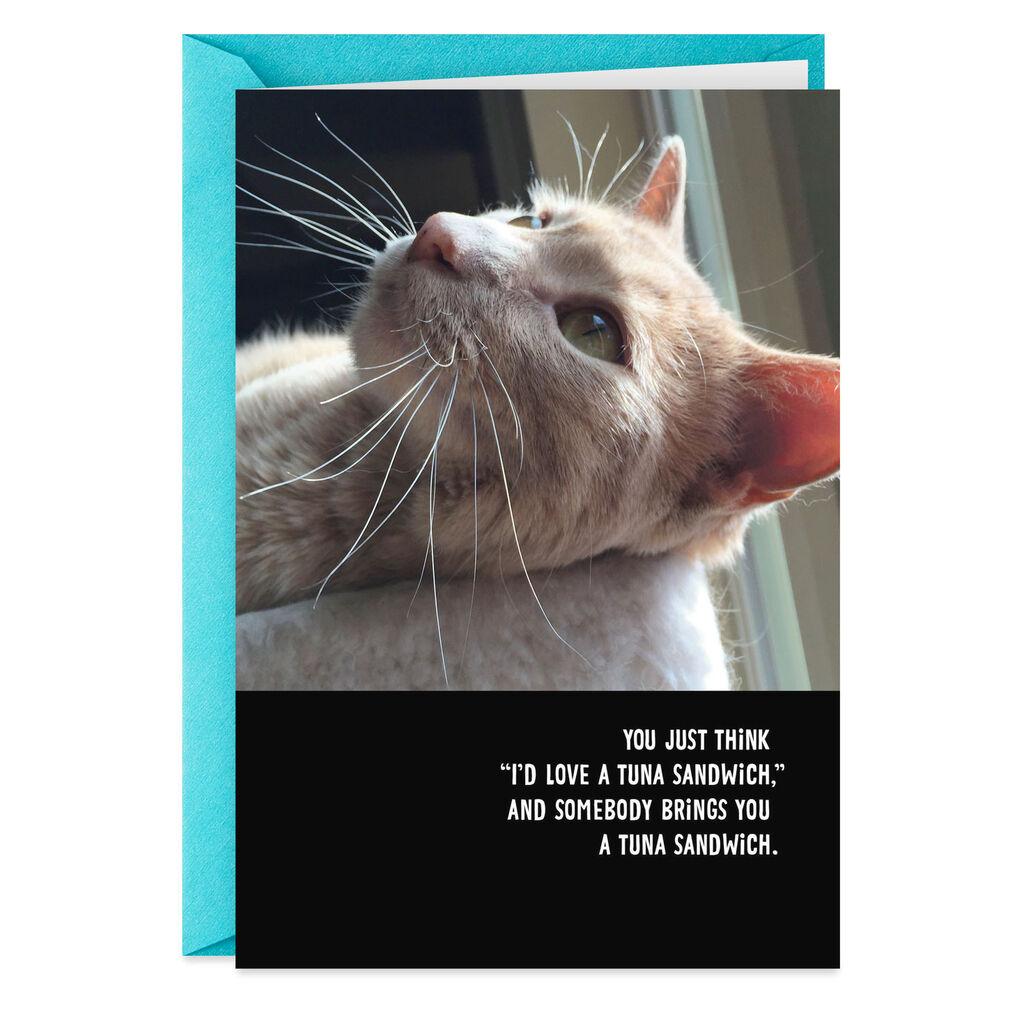 Cat Photo Bring Me A Tuna Sandwich Funny Birthday Card