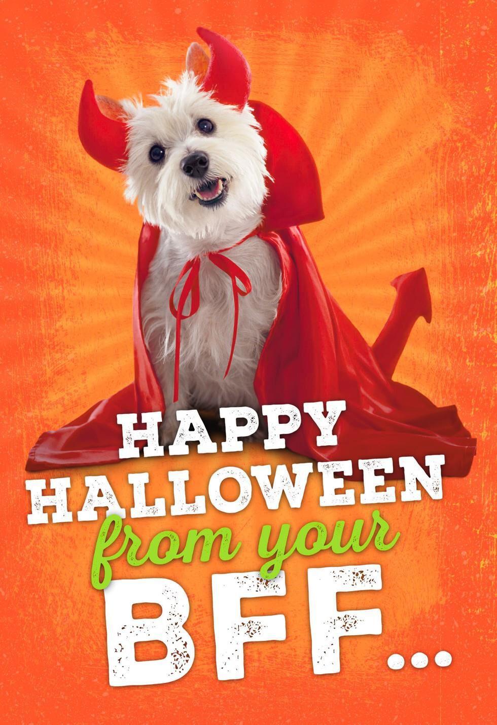 Best furry friend halloween card greeting cards hallmark kristyandbryce Images