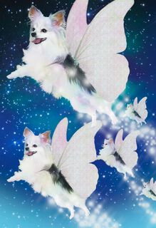 Flying Butterfly-Pups Funny Cosmic Birthday Card,