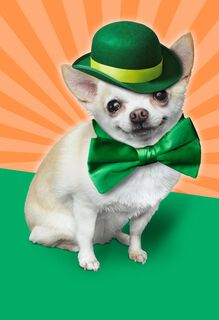 Chihuahua Leprechaun St. Patrick's Day Musical Card,