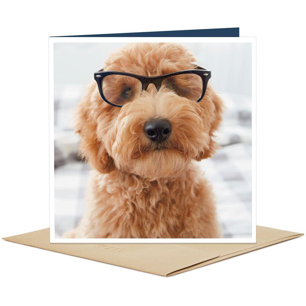 Dog Wearing Glasses Blank Card - Greeting Cards - Hallmark