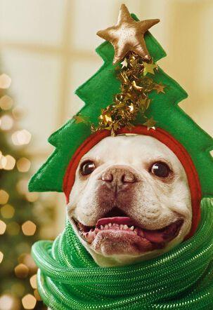 Jolly Looks Good On You Christmas Card