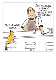 Cat in a Bar Blank Card,