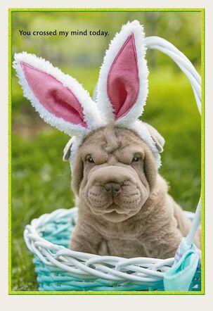 Puppy in Bunny Ears Easter Card
