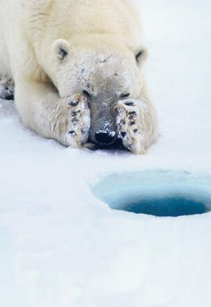 Polar Bear on Ice Hole Funny Belated Birthday Card