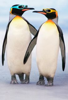 Cool Couple of Penguins in Sunglasses Anniversary Card,
