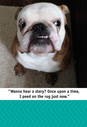 Bulldog Stories Funny Birthday Card