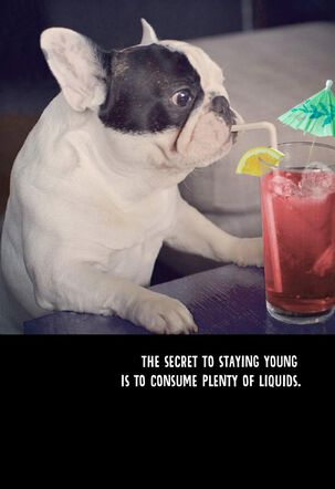 French Bulldog's Advice for Staying Young Funny Birthday Card