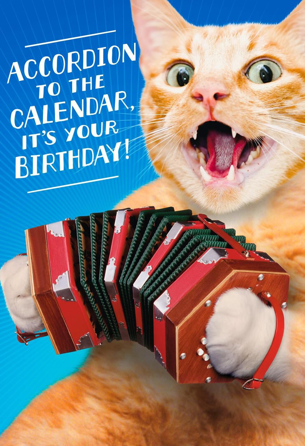 Cat Playing Accordion Musical Birthday Card Greeting Cards – Birthday Song Card