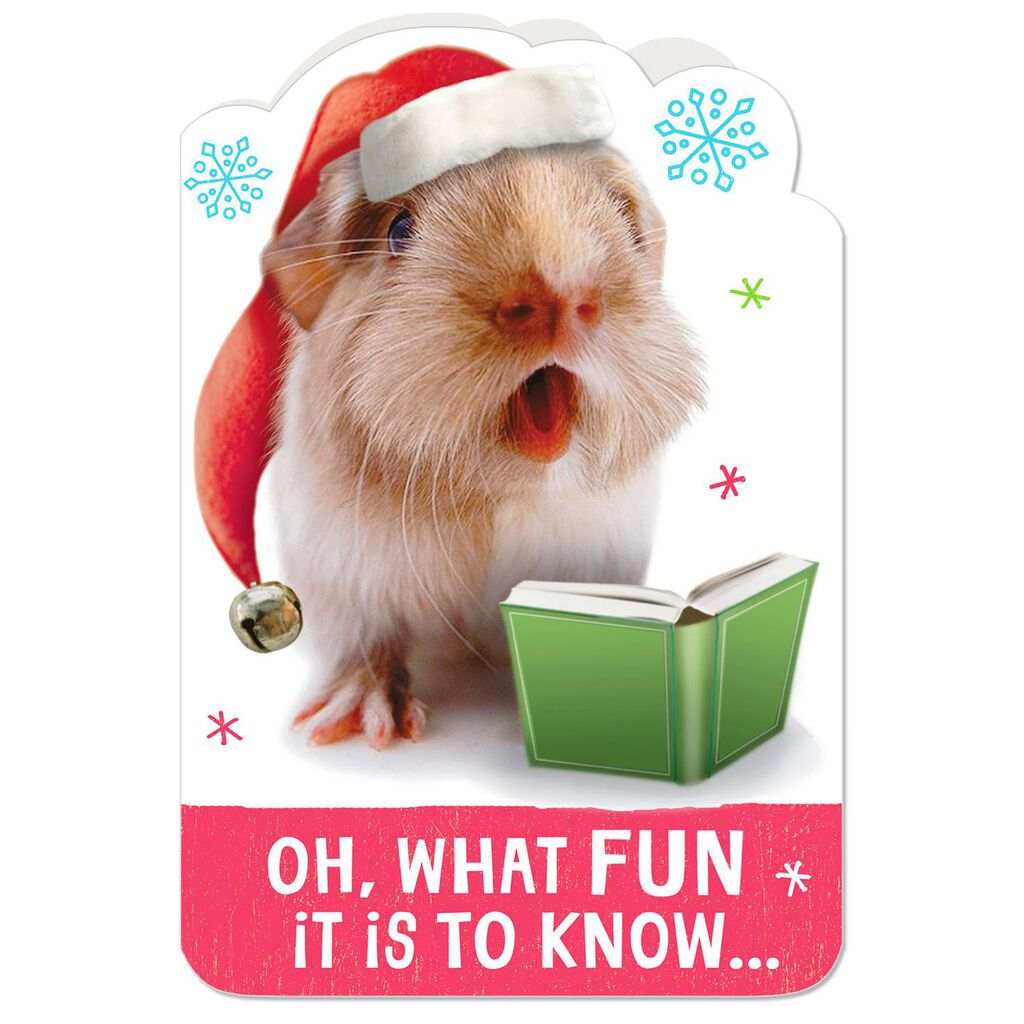 oh what fun guinea pig christmas card with sound
