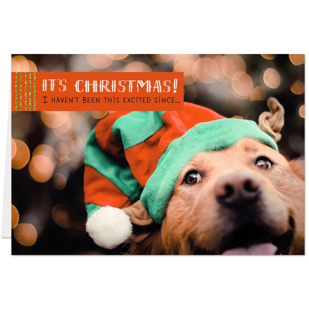 Pawsome Christmas Card From the Dog - Greeting Cards - Hallmark