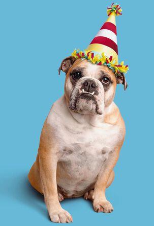 Bulldog in Party Hat on Blue Birthday Card