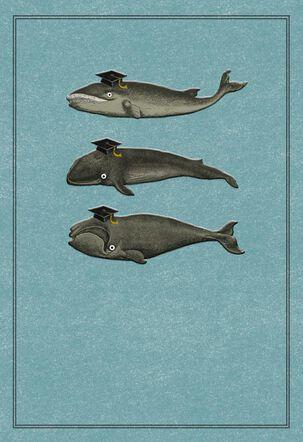 Whale, Whale, Whale Funny Graduation Card
