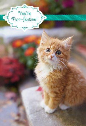 Orange Tabby Purr-fection Birthday Card