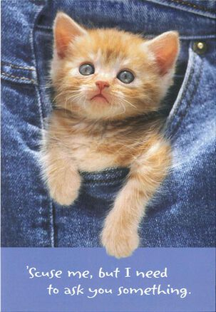 Pocket Kitty Cat Birthday Card