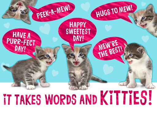 KITTENS! Funny Sweetest Day Card,