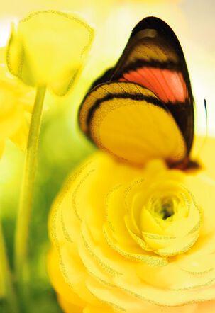 Butterfly on Yellow Flower Blank Card