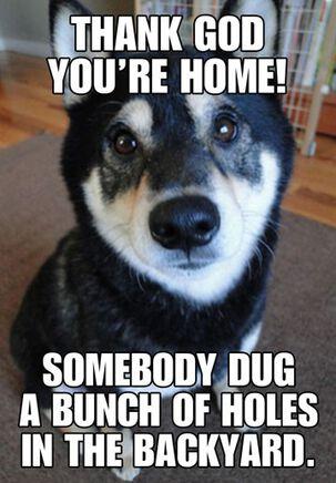 Digging Dog Funny Birthday Card