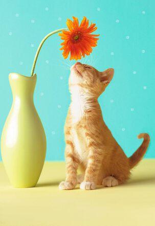 Kitten With Flower Blank Card