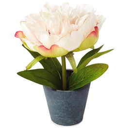 Light Pink Potted Peony Decoration, , large